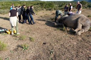 Tug of war with a rhino...he is winning!