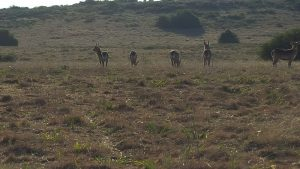 Water buck seen on the data collection game drive