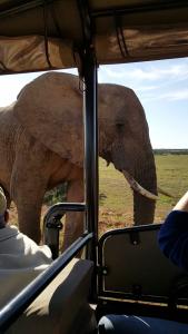 Elephant close up 2