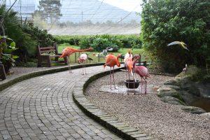 Flamingos at Birds of Eden.