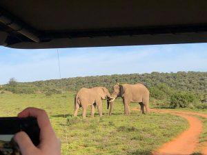 The same male elephants having a little disagreement!
