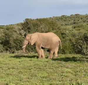 Elephant behaviour observations