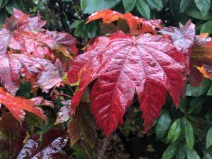 44 Autumn November 9, 2018