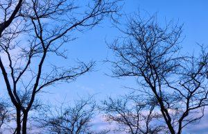 A Vancouver Winter Sky