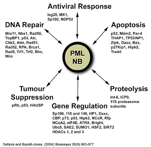 PML NB Functions
