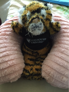 The Dalhousie Tiger that was given to each QES scholar at pre-departure, all set to travel home.