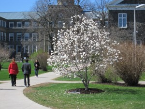 Magnolia planted by Killam staff in memory of a colleague who passed away in 1996