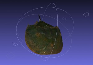 3D scan of a horseshoe crab.