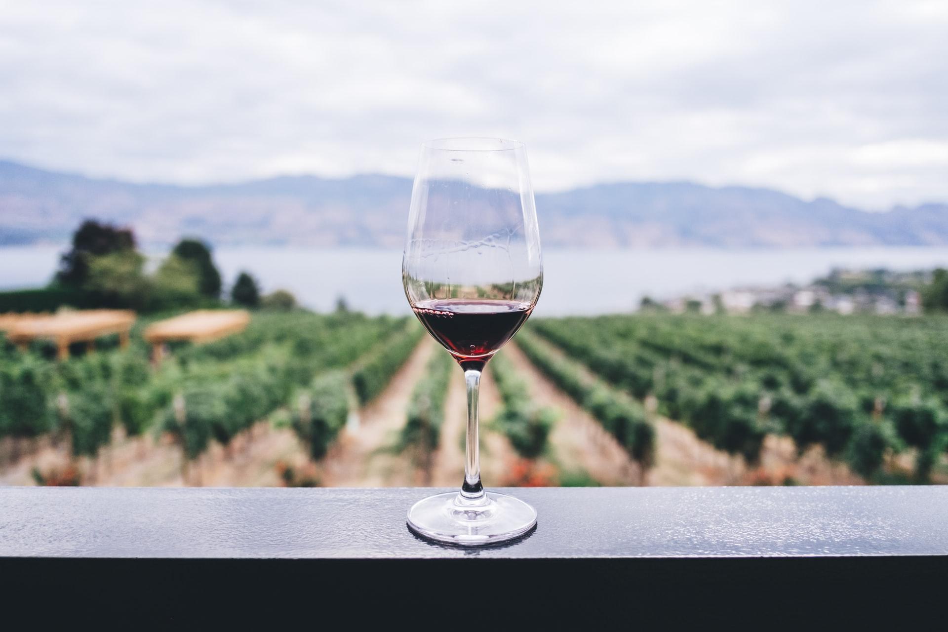 A wine glass overlooks a vineyard in Okanagen Valley, British Columbia